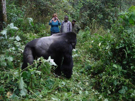 Amazing Gorilla Expeditions