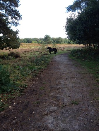 Diss, UK: We enjoy walking around the heath and the guided walks