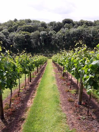 Lewdown, UK: The Vineyard