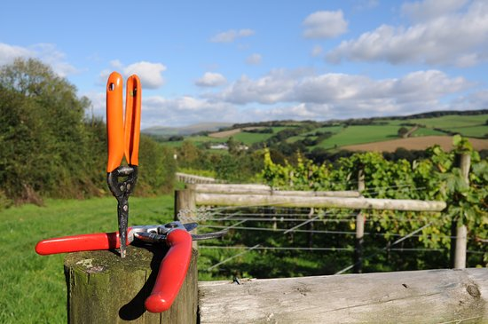 Lewdown, UK: Vineyard Tools