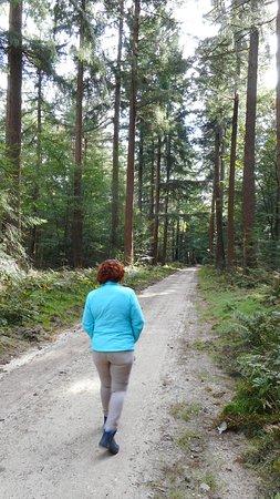 Garderen, Hollanda: Het Speulderbos direct achter het hotel