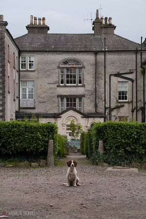 Longueville House Hotel: One of my new friends.