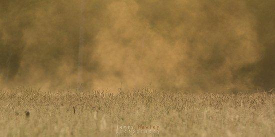 Perth Wildlife Reserve