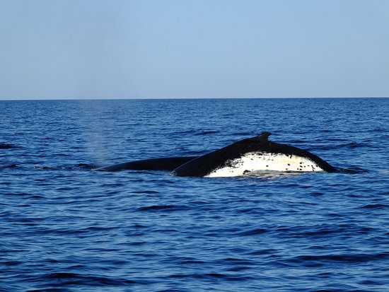 Whales in Paradise - Gold Coast Whale Watching Pty Ltd : Whale watching Goldcoast style 2016