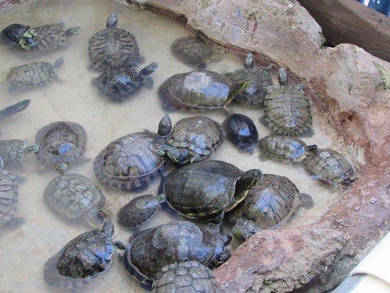 tortugas de todos tamaños y colores.: fotografía de Tortugranja ...