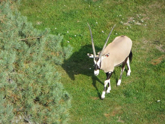 Olomouc, República Checa: Oryx seen from the zoo viewing tower