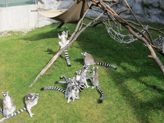 Olomouc, República Checa: Lemurs doing their thing