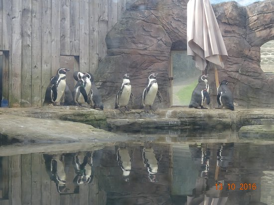 Gweek, UK: Lovely penguins