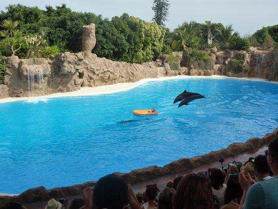 depuradoras. visita premium - Picture of Loro Parque, Puerto de la Cruz - Tri...