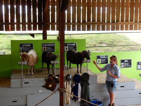 Guiting Power, UK: Education talk on goats.