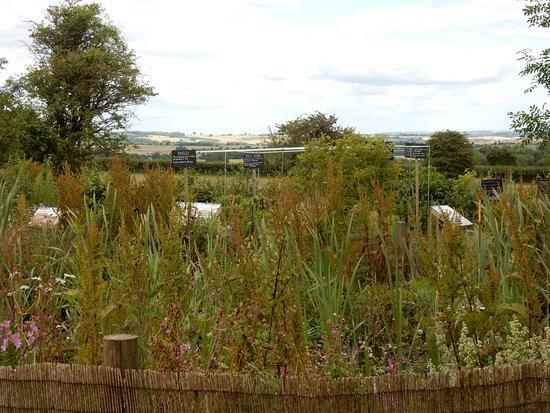 Guiting Power, UK: Nature area/woodland walk and bird watching area.