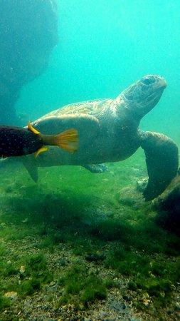 Saint-Leu, เกาะเรอูนียง: tortue