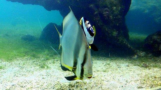 Saint-Leu, เกาะเรอูนียง: poissons