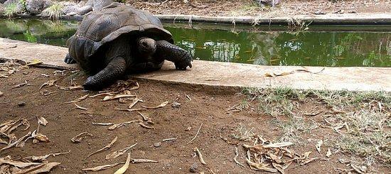 Saint-Leu, Reunión: tortue