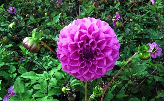 St Austell, UK: Lovely flowers.