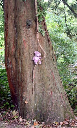 St Austell, UK: Dar, my granddaughters favourite old teddy enjoys a visit to Heligan!