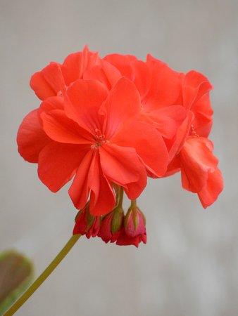 Wolverhampton, UK: flower.