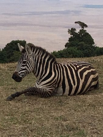 andBeyond Ngorongoro Crater Lodge: zebra sitting on the lawn looking out to beautiful view