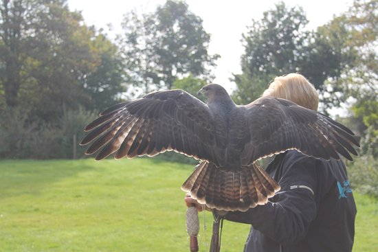 Feathers and Fur Falconry Centre
