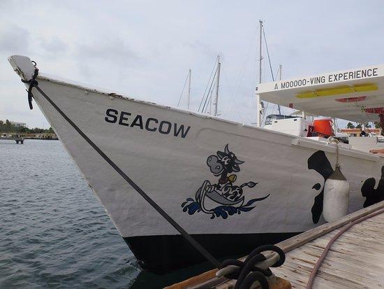 Kralendijk, Bonaire: de seacow