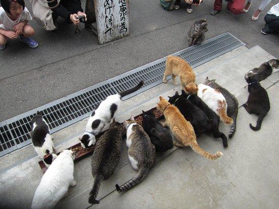 Echizen, Japonia: 御誕生寺