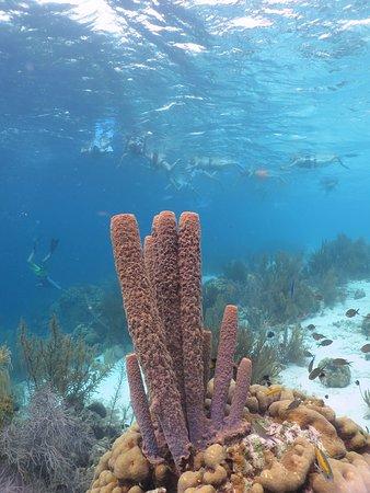 Kralendijk, Bonaire: koraal