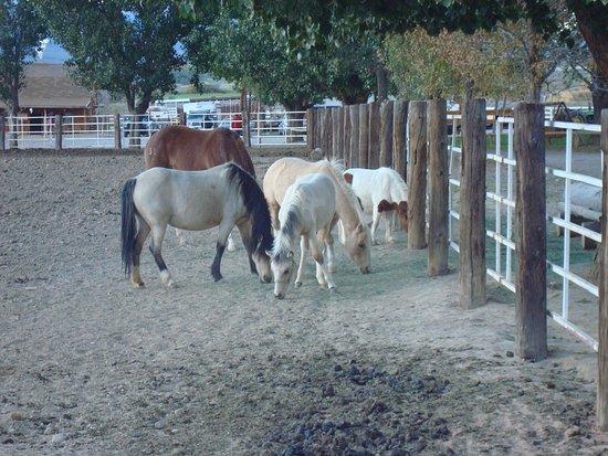 Rockin' R Ranch: Chevaux dans l'enclos