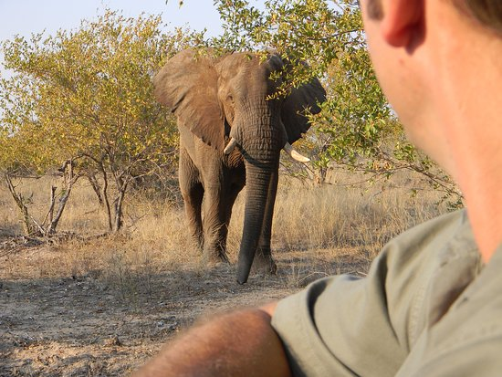 Balule Nature Reserve, Sudáfrica: Elephant sighting while on game drive