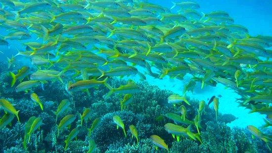 Dima red sea hurghada 2017 ce qu 39 il faut savoir pour for Red sea fish