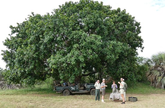 Phinda Private Game Reserve, Sudafrica: African/Natal Mahogany tree and time for tea
