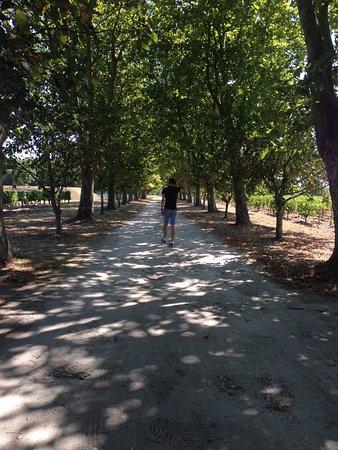 Begadan, Frankrike: Vineyard