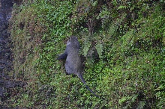 Sabie, Sudáfrica: baboons que se encuentran en los alrededores