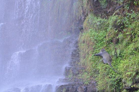 Sabie, Sudáfrica: baboon en la cascada