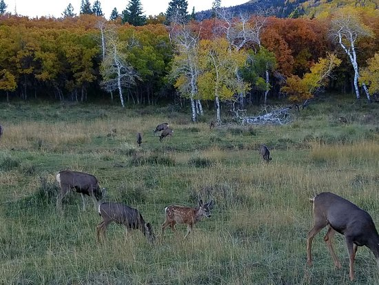 Monticello, UT: Autumn colors and plenty of deer on Harts Draw Rd