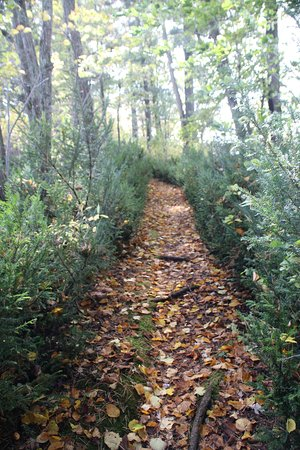 Birchwood, WI: Nature Trail