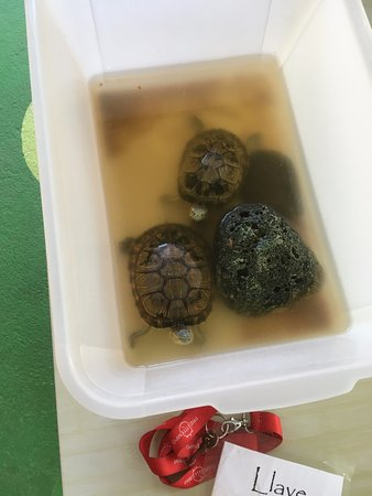 La Casa de las Flores Hotel: Turtles