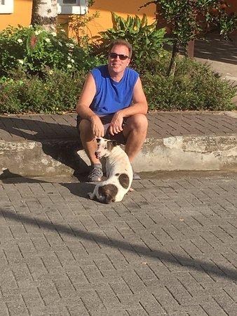 La Casa de las Flores Hotel: One of many street dogs.