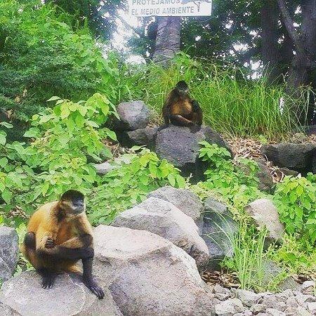 Playa Hermosa, Costa Rica: Monkey island!