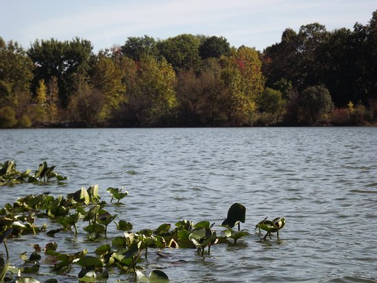 Springfield Lake Park