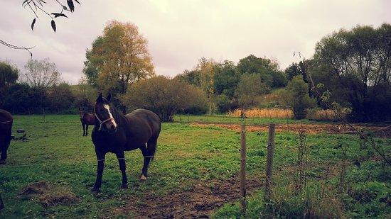Rosia, อิตาลี: Horse