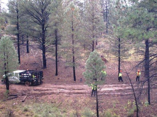 Williams, AZ: Track crew stuck in the mud