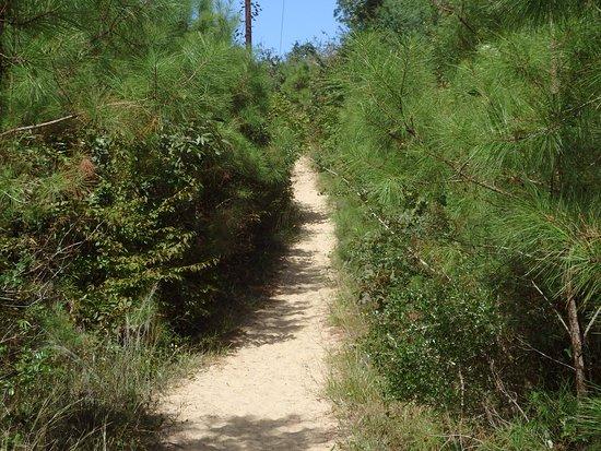 Sweetgum Swamp Trail : Sand trap