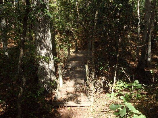 Sweetgum Swamp Trail: Trail bridge