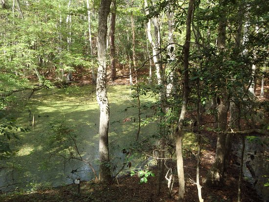 Sweetgum Swamp Trail: another swamp