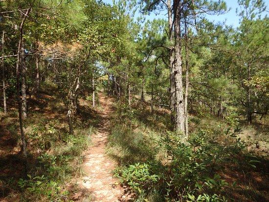 Sweetgum Swamp Trail: Trail, sand+pine needles