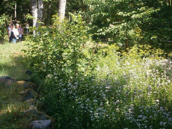 Kaina, Estonia: Utspridda gravar och gtavstenar i skogen vid kapellet.