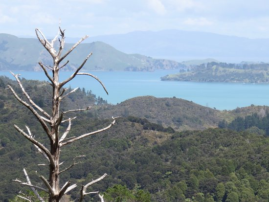 Coromandel, New Zealand: the view from the top