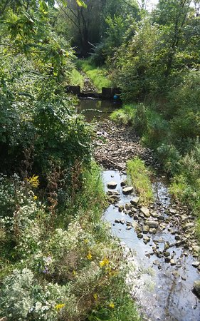 Lemont, IL: Creek under bridge on trail.