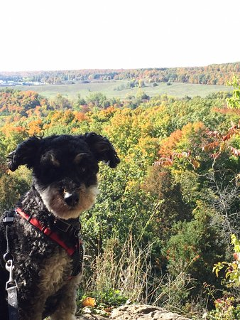 Rattlesnake Point Conservation Area: A beautiful October day for a hike at Rattlesnake with our wee Schnoodle