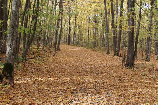 Summerstown, Canada: a walk through the forest